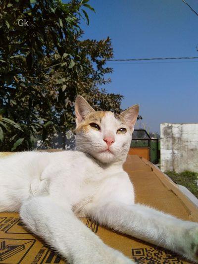 Portrait of cat sitting against tree