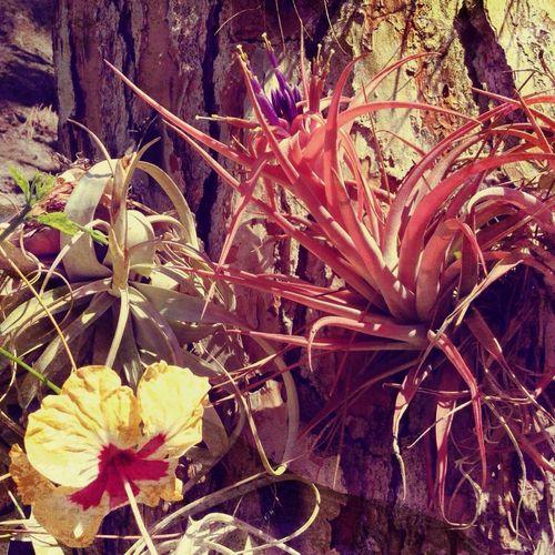 Giardini La Mortella Fiori Flowers
