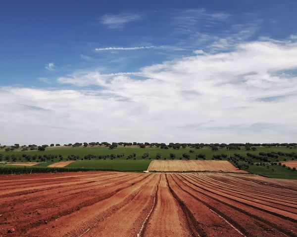 Agriculture Rural Scene Crop  Field Cloud - Sky Landscape Beauty In Nature Growth Scenics Day Sky Freshness Instagramer Umeugram