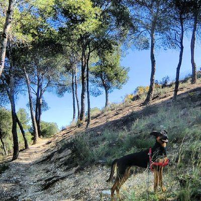 Día de campo. Runa Tree Igersaragon Igerszgz nature doglovers