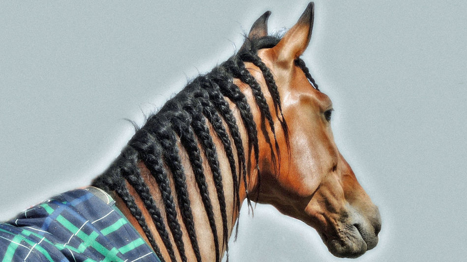 Andalusian Andalusian Horse Horses Blue Blue Sky Handsome Handsome Boy Horse Horse Photography