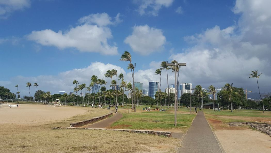 Palm Tree Ocean Windy Towers Honolulu