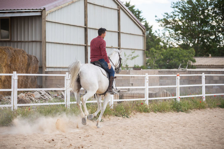 Man riding horse in stable