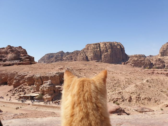View of a cat on rock
