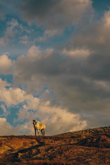 Horse standing on landscape against cloudy sky during sunset