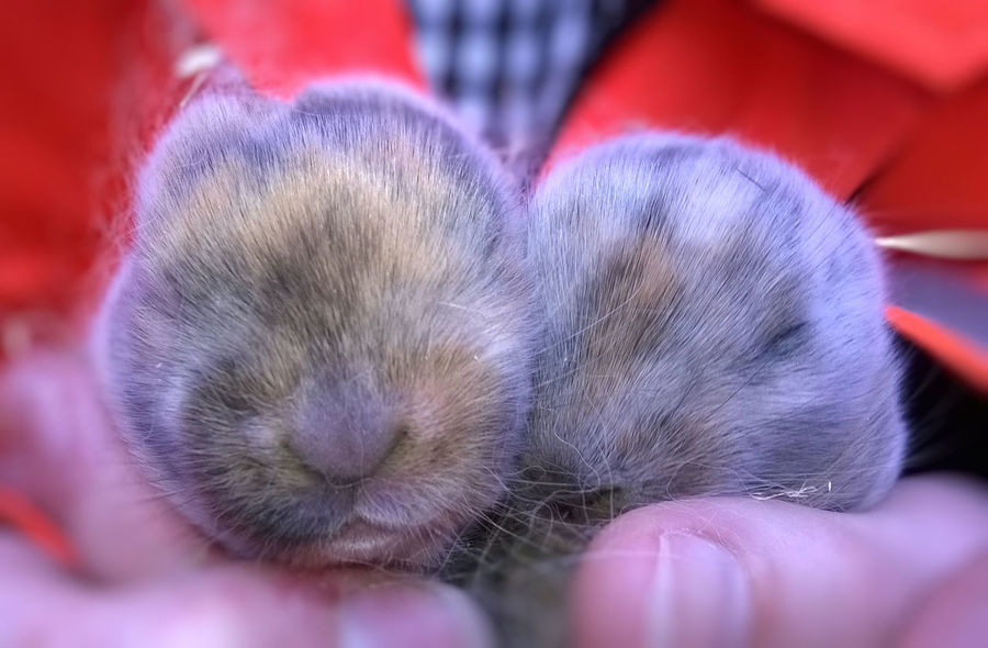 Baby Rabbit Baby Rabbits Birthday Growth Mammal Nature Rabbit Rabbits The Circle Of Life The Cycle Of Life