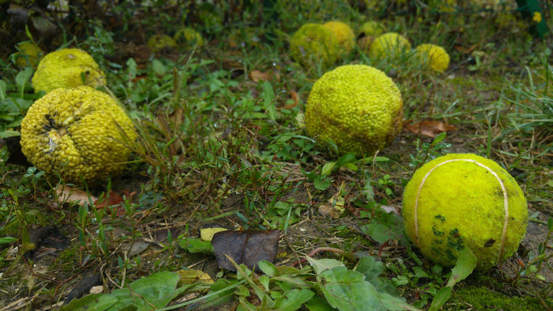 The Odd One Out Beauty In Nature Close-up Day Food Freshness Fruit Grass Grassy Green Green Color Leaf Nature No People Outdoors Tennis Tennis Ball Tennis Balls