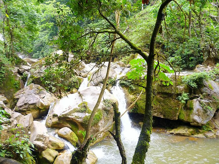 Forest Tranquil Scene Beauty In Nature Peru-Junin Oxapampa Green Color Tourism Vacations Non-urban Scene Forest Adventure Nature River