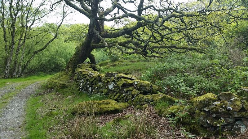 Nature Green Color Tree Outdoors Day Beauty In Nature No People Forest Preseli Mountain Preseli Hills Rural Scene Ty Canol Wales Samsung Galaxy S5 The Great Outdoors - 2017 EyeEm Awards No Filter