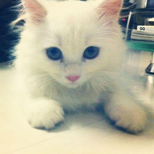 My Cutie Pie <3 First Eyeem Photo