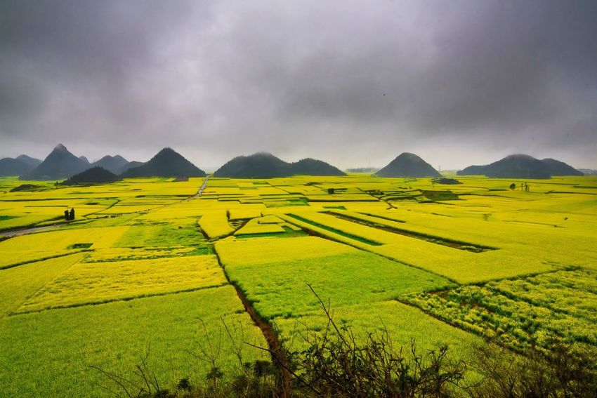 Canola field, rapeseed flower field with the mist in Luoping, China Luoping Rain Rapeseed Field Aerial View Agriculture Beauty In Nature Canola Canola Field Cultivated Land Day Farm Field Fog Hill Landscape Mist Mountain Mountain Range Nature No People Outdoors Rapeseed Oil Rapeseed Yellow Tadaa Rural Scene Scenics Sky Tourism Tranquil Scene Tranquility Village
