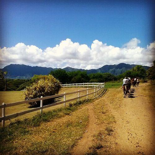 Honolulu Horseback Riding Tbt ❤