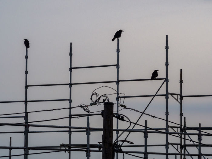 Low Angle View Of Birds Perching On Construction Frame