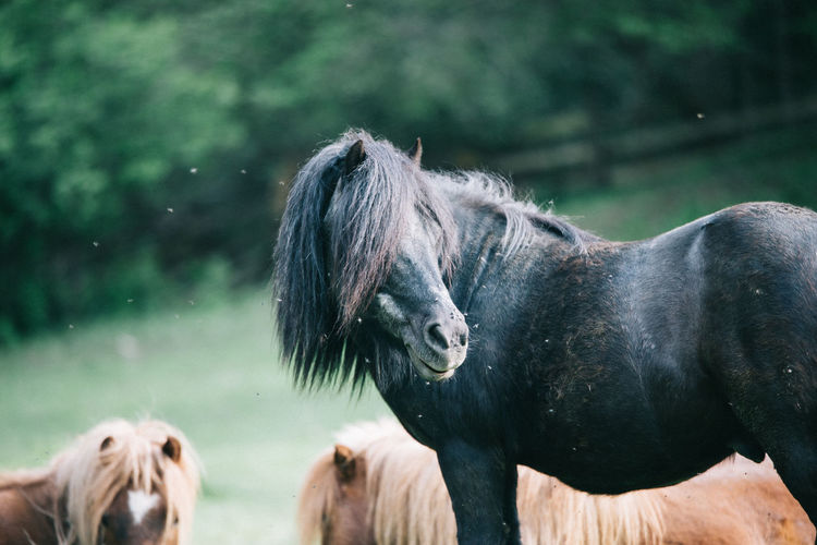 Side view of black horse standing on field