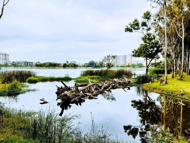 A natural bridge in progress.. Lake Serine Bridge Nature Reflection