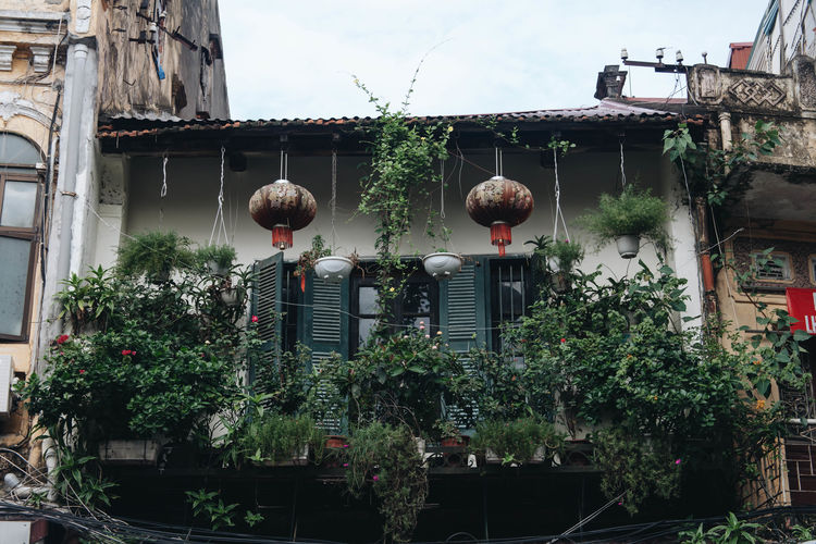 ASIA Life Vietnam Architecture Balcony Building Exterior Built Structure Day Growth Hanging House Lantern Leaf Nature No People Outdoors Place Of Worship Plant Potted Plant Sky Tree