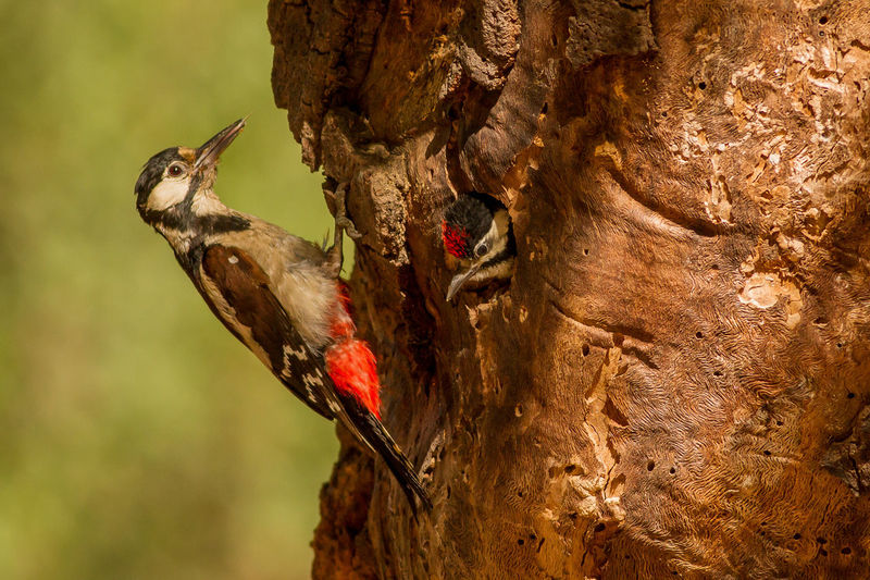 Close-up of birds perching on tree trunk