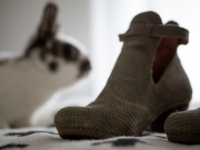Close-up of shoe against rabbit at home