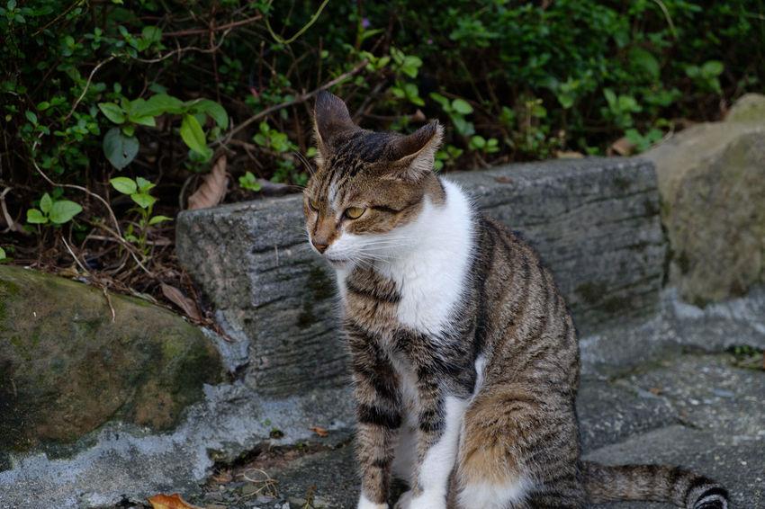 FUJIFILM X-T2 Houtong Cat Village Taiwan Travel Traveling Animal Animal Themes Cat Fujifilm Fujifilm_xseries Houtong Kitty Cat Mammal Stray Cat Travel Destinations X-t2 にゃんこ 台湾 台湾旅行 猫 臺灣