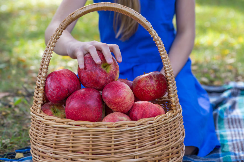 girl and a harvest of red apples in a wicker basket Agriculture Apple Bio Diet Eco Family Farm Gardener Rustic Vegetarian Apples Basket Food Fresh Garden Girl Harvest Healthy Eating Healthy Food Organic Picking Red Apple Ripe Straw Vegan Agricultural Field Crop  Plantation Wicker Juicy