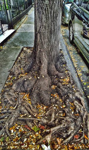 Survival Strategy Murray Hill Nyc Tree Pit Blues