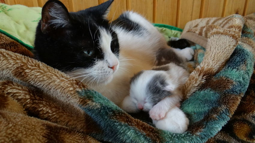 Animal Head  Cat Cat Lovers Catoftheday Cats Cats Of EyeEm Cat♡ Favourite Feline Home House Cats Kitty Kitty Cat Pets