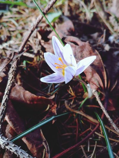 Winter Flower Plant Nature Petal High Angle View Leaf Growth