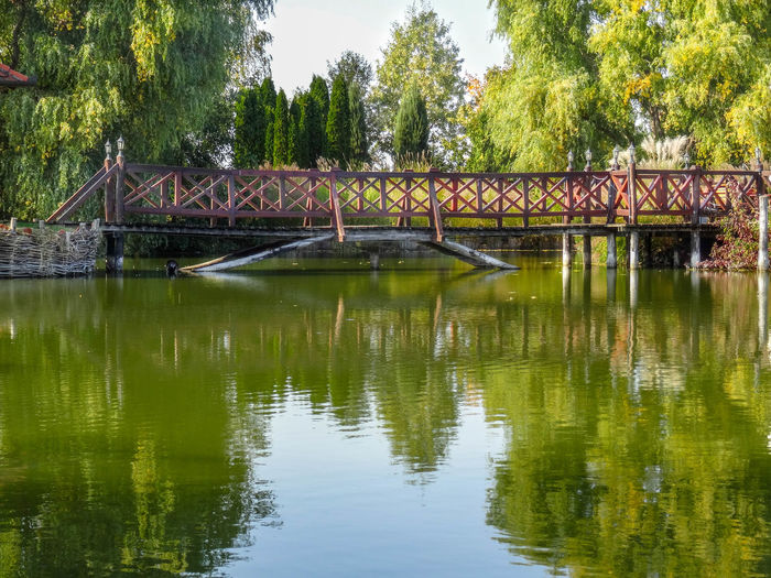 Reflection Water Tree Bridge Architecture Connection Built Structure Plant Lake Nature Bridge - Man Made Structure Day Waterfront No People Tranquility Outdoors Beauty In Nature Growth