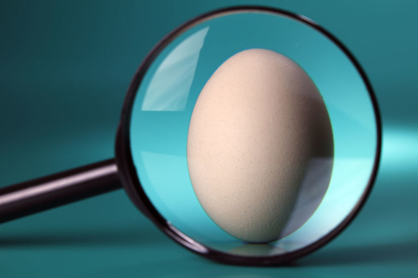 magnifier with egg Enlarge Research Close-up Day Egg Eggcup Focus On Foreground Food Food And Drink Freshness Healthy Eating Indoors  Magnifying Glass No People Still Life Studio Shot Table