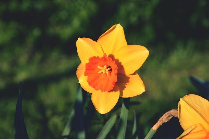 Flowers Spring Spring Flowers
