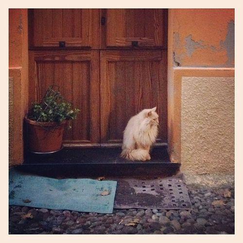 Altro gatto algherese vanitoso Littleballoffur Cat Oldhouses Cats Doors Houses Sardegna Oldtown Alghero Doorways Gatti Sardinia Centrostorico