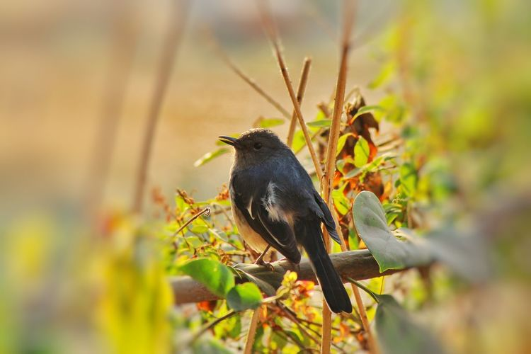 Animal Wildlife Animal Animals In The Wild Bird Nature No People One Animal Full Length Animal Themes Outdoors Beauty In Nature Day Close-up Focus On Foreground Photooftheday Canon 1300d Animals In The Wild Perching DSLRShot Multi Colored Nature