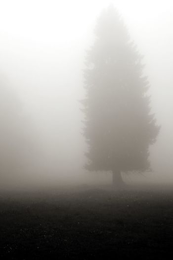 Fog Weather Tree No People Cold Temperature Outdoors Landscape Black And White Black And White Photography Tree In Fog Treescollection Tree Silhouette Depression Sad And Depressed  Melancholic Landscapes Melancholy EyeEm Best Shots EyeEm Nature Lover Melancholic Mood Shades Of Winter
