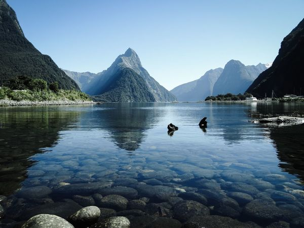 Mountain Reflection Beauty In Nature Water Scenics Tranquility Nature Tranquil Scene Mountain Range Clear Sky Idyllic Travel Destinations Lake Landscape Outdoors No People Day Stones Water Reflections New Zealand Mirror Lake Milford Sound Fjord Morning Light Morning