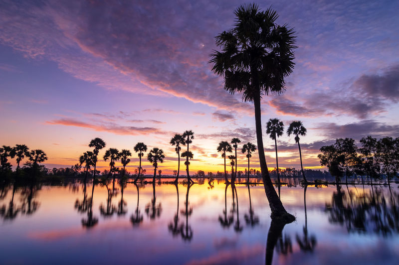 Reflection Of Silhouette Palm Trees In Lake Against Sky