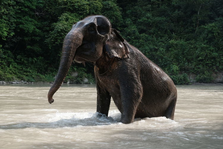 Close-up of elephant in water / river