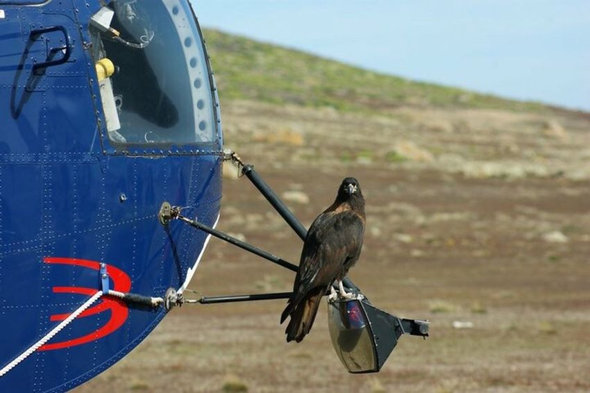 Johnny Rook Bird Of Prey Helicopter