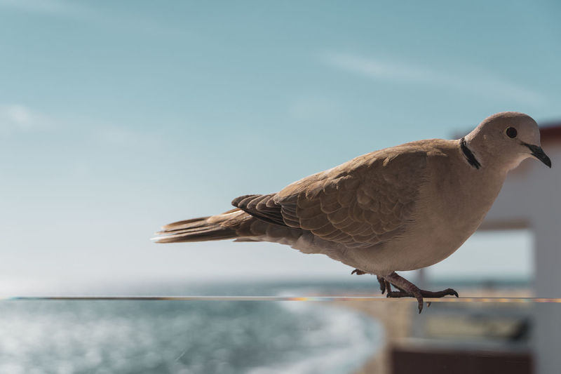 Close-up of bird perching on a sea