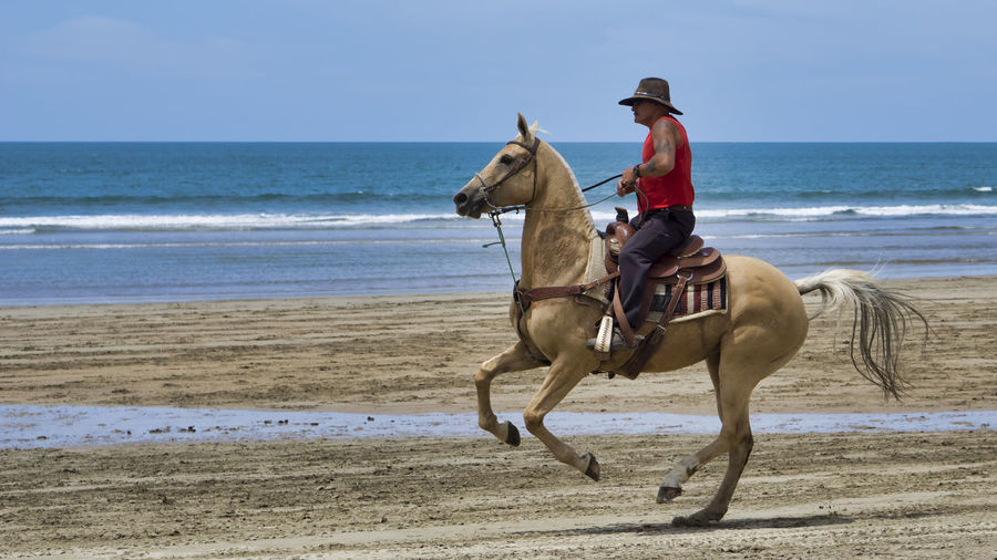 Animal Themes Sea Domestic Animal Water Land Beach Horse Horseback Riding Riding Animal Wildlife Ride Horizon Livestock Horizon Over Water One Animal Pets Activity Maori Aotearoa