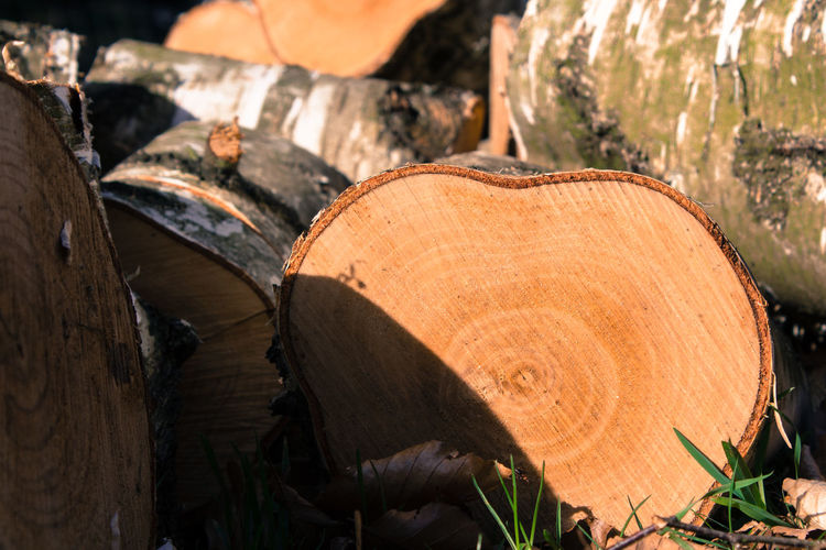 Brown Close-up Day Deforestation Environmental Issues Forest Log Lumber Industry Nature No People Outdoors Sunlight Timber Tree Tree Ring Tree Stump Tree Trunk Wood - Material