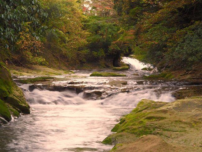 養老渓谷 Nature Beauty In Nature Scenics Water Rock - Object Flowing Water Tree Tranquility No People Travel Destinations Outdoors Waterfall Motion Forest Day Rapid Power In Nature Japan