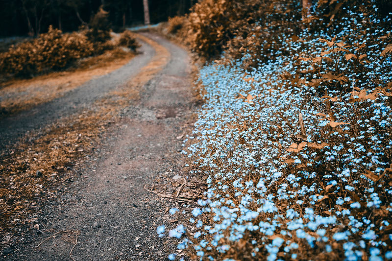 Flowers road... Outdoors The Way Forward Selective Focus Field Road Tranquil Scene Focus On Foreground Transportation Beauty In Nature Tranquility No People Plant Direction Nature Day Close-up Tree Growth Land Sunlight Scenics Landscape Road Flower Blue