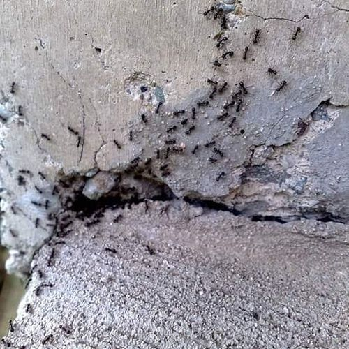 Nature Rough Ants Black Ants