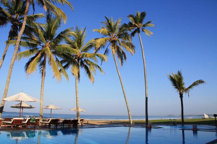 Palm Trees at Sky Beauty In Nature Blue Coconut Palm Tree Horizon Over Water Nature Non-urban Scene Outdoors Palm Tree Scenics Sea Shore Sky Sri Lanka The Surf Hotel, Bentota Tranquil Scene Tranquility Tree Vacations Water