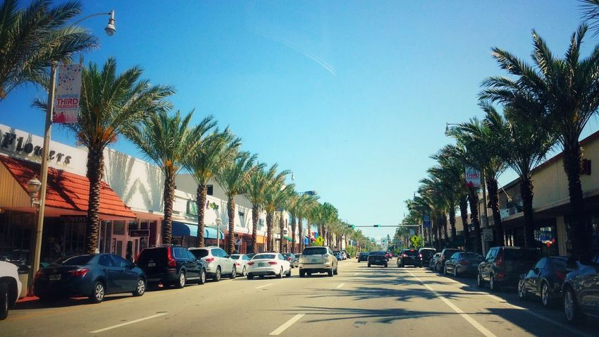 Tree Palm Tree City Transportation Outdoors Land Vehicle Clear Sky Sky No People Day The Drive Street Miami Beach USA USAtrip Palm Trees Traffic City Transportation Drive City Street Sity Life Street Photography Driving Mode Of Transport