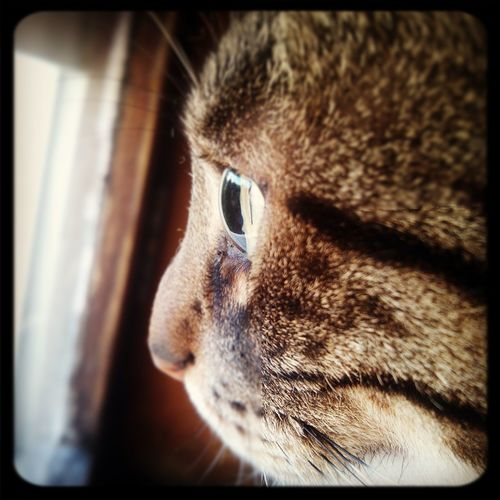 Looking at... Cat Lovers Cat Watching Animal Love Details