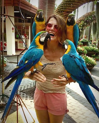 Bird Parrot Animal Themes Macaw Gold And Blue Macaw Animals In The Wild One Animal Blue Animal Wildlife One Person Perching Feather  Young Adult Real People Outdoors Peacock Pets Young Women Day Adult