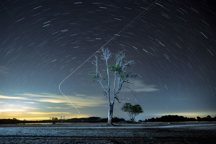 Elyora Beach Night Sky Astronomy Star - Space Sky Night Space Scenics - Nature Long Exposure Beauty In Nature Motion Tree Nature Star Trail Galaxy Star Star Field Water Plant Blurred Motion No People Tranquility Outdoors Space And Astronomy