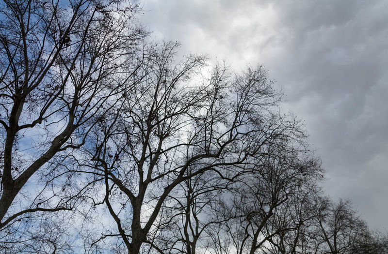EyeEm Best Shots Eye4photography  EyeEm Best Pics EyeEm Sky Tree Cloud - Sky Low Angle View Backgrounds Bare Tree Branch Nature Outdoors Silhouette Tranquility Beauty In Nature Scenics - Nature Overcast Growth Non-urban Scene Tree Canopy