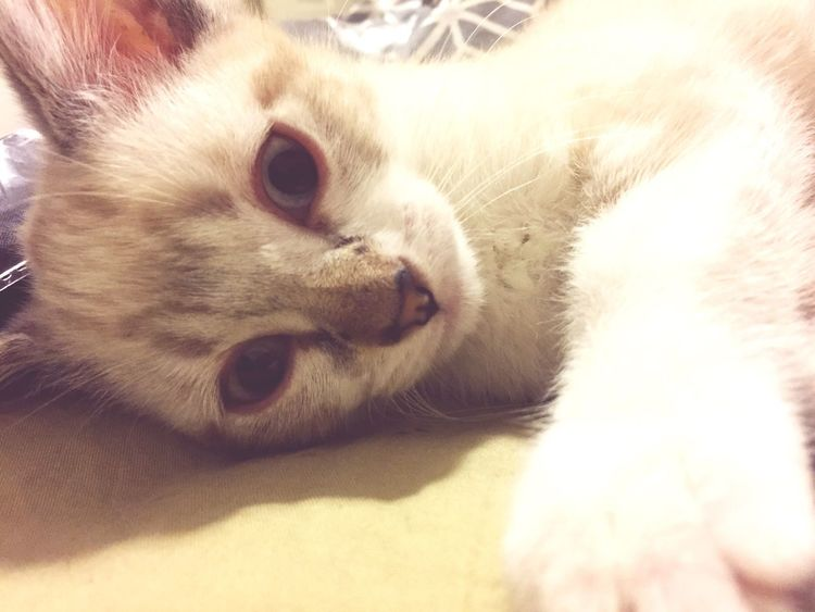 Kitten cuddles. 😍